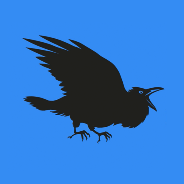 zwarte vogel oranjekade